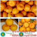 Quality mandarin orange,fresh juice for sale