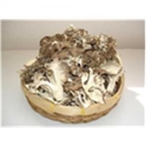 China Sliced Maitake Mushroom on sale