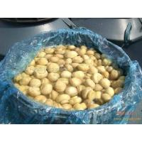 Quality Salted Mushroom in Drum for sale