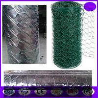 China price of  Plastic Coated Chicken Wire Mesh / Low Carbon galvanised wire mesh rolls on sale