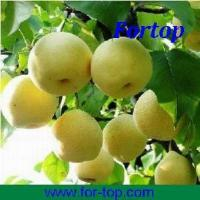 Buy Pear in Can at wholesale prices