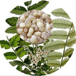 Quality Natural Boswellia Serrata Extract, 65% Boswellic acid for sale