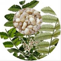 Buy cheap Natural Boswellia Serrata Extract, 65% Boswellic acid from wholesalers