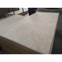 China 1220*2440*4-25mm poplar core E1/E2 glue pine  plywood on sale