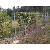 Star pickets are used to support welded wire mesh panel in farmland.