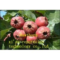 Quality Organic Hawthorn for sale