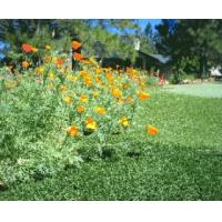 Quality Aatural apperance artificial turf for sale