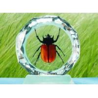 Quality Insect Desktop Decoration for sale