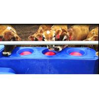 Buy cheap High quality pasture  4m Blue Thermo Six-Hole drinking Waterer  for animals  (with cover and balls) made of LLDPE from Wholesalers