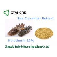 Quality Sea Cucumber Extract Natural Cosmetic Ingredients Holothurin 20% For Cosmetic for sale