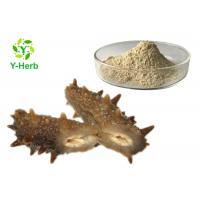 Quality Sea Cucumber Intestinal Protein Peptide Powder Stichopus Japonicus Extract for sale