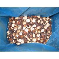 Quality Sell 2010 hot sale wild mushroom for sale