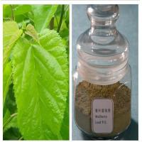 China Natural Mulberry Leaf Extract Treat Diabetes Mellitus DNJ on sale