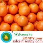 Quality shatang orange,baby orange for sale