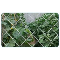 Quality 5x5cm Hole Size Galvanized Chain Link Fence Iron Wire Mesh Diamond 5x1m for sale