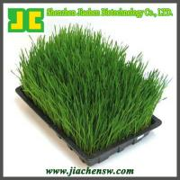 China organic Barley Grass Powder on sale