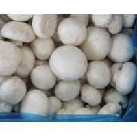 Quality IQF Champignon/Frozen Champignon Wholes for sale