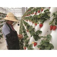China Expertise Hydroponics Aeroponics & Aquaponics System Consultancy Mentoring Facilities on sale