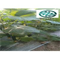 Quality Nutritious Cuke Vegetable Benefit Kidney Effective Against Skin Aging for sale