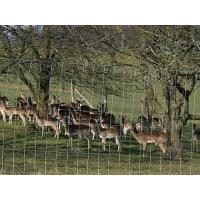 A herd of deer in the filed with hinge joint fence.
