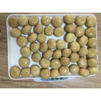 Quality Factory Price NEW SEASON Brown Canned Champignon Mushroom Whole in Brine N.W.2840G for sale