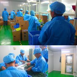 Dongguan Weijun Toys Co., Ltd.