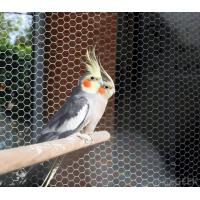 Quality stainless steel 304/316 Aviary mesh for bird cages netting/aviary building for sale