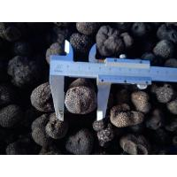 Quality Factory Price Premium Grade Chinese Fresh Truffle 1-3CM/3-5CM/5CM above for sale