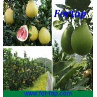 Quality Fresh Pomelo (FP-002) for sale