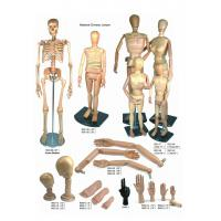 Life - Sized Wooden Drawing Figure Model , Colourful Flexible
