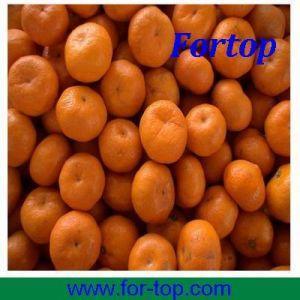 Quality Nanfeng Honey Orange (NHO-003) for sale