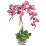 Quality The hotsale phalaenopsis pot flowers for sale