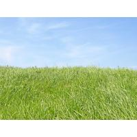 Quality SGS artificial lawn used for landscaping for sale
