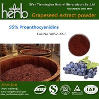 Quality Grape Seed Extract for sale