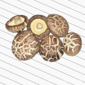 China Dried Shiitake Mushroom on sale