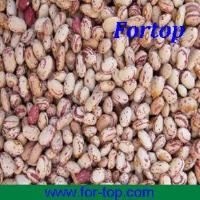 Buy Dried White Kidney Beans (CKB-004) at wholesale prices