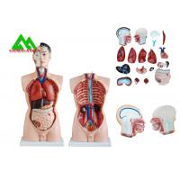 Quality Medical Dual Sex Human Torso Anatomy Model With Head Clear Structure for sale