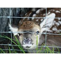 A little deer tried to put its head out of the hinge joint fence.