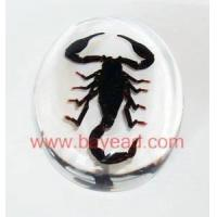 Quality Real insect amber Paperweight,office gifts,business gifts,Corporate Gifts for sale