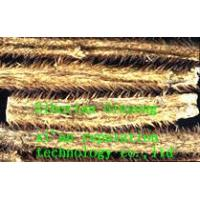 Quality Organic Siberian Ginseng for sale