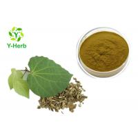Quality Medicinal Kava Kavalactone Extract Powder Piper Methysticum Extract for sale