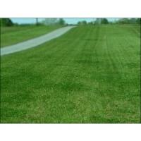 Quality landscaping turf for sale