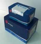 Quality Blood DNA Isolation Max Kit 16 Preps / 32 Preps For Rapid Preparation Of Genomic DNA for sale