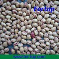 Quality Light Speckled Kidney Beans for sale