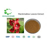 Quality Pure Nature Marshmallow Leaves Extract Althaea Officinalis Leaves Extract for sale