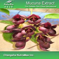 Quality Mucuna Extract for sale