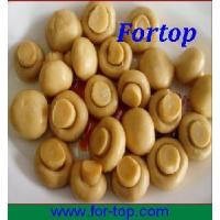 Quality Canned White Mushroom in Brine for sale