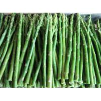 Quality Frozen White/green Asparagus for sale