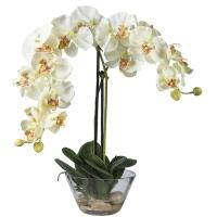 Quality small phalaenopsis orchids--9 heads flowers for sale