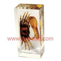 Quality Real Scorpion insect amber Paperweight,resin crafts for sale